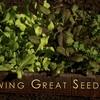 Growing Great Seedlings