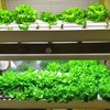 Build Your Own Home Hydroponic Farm