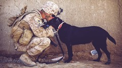 **The Only Dedicated & Comprehensive PTSD Course On The (UDEMY) Platform! – Everything You Need To …