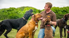 Dog Training For Humans - How to Play with Your Dog