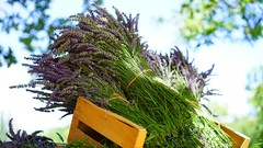 Aromatherapy- Using Essential Oils For Natural Living (5 CE)