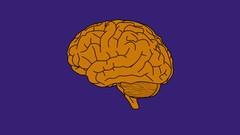 Netcurso-examen-mental-basico