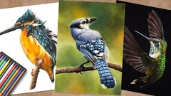 3 Little Birds with Colored Pencils