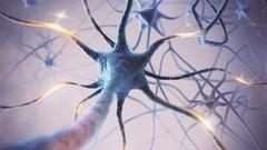 neuroplasticity, brain,  neuroscience, Turn off the Fight, Flight, Freeze Response and Turn on Calm, …