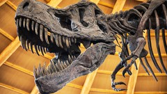 103: Did Man Walk With Dinosaurs?
