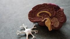 Fundamentals of Medical Neuroscience Part-1