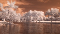 Digital Infrared Photography for Those Who Think They Can't