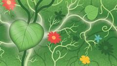 Herbology for Beginners