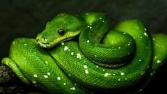 Python Programming Course Bundle : Build 15 Applications - UdemyFreebies.com