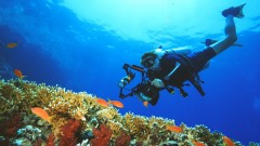 Discover the magic of underwater photography and start taking great images underwater with simple …
