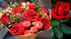 Angiosperm :  Flowering Plant