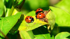 Organic & biological solutions to pests in vegetable garden.