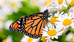 Gardening Know How: Attracting Birds and Butterflies