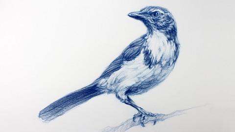 Netcurso-the-art-and-science-of-drawing