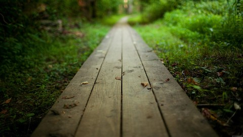 Embrace The Pain  Your path to transformative change