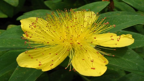 Herbalism :: Identify & Harvest Medicinal Plants Certificate
