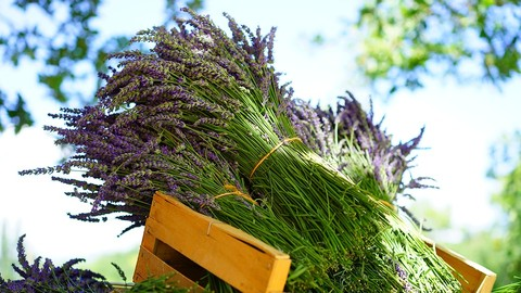 Netcurso-aromatherapy-how-to-use-essential-oils-in-your-everyday-life