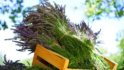 Netcurso-free-aromatherapy-using-essential-oils-in-your-daily-life