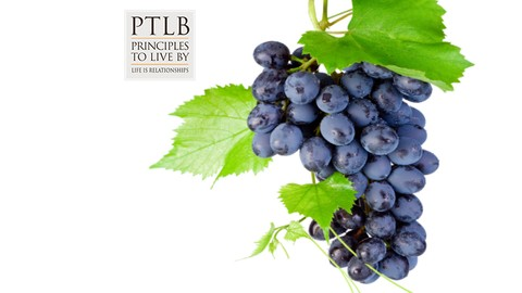 Netcurso-keys-to-grapeness