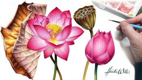 Paint Realistic Watercolour and Botanicals - LOTUS