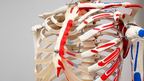 Biology101: Nervous, Endocrine and Skeletal System