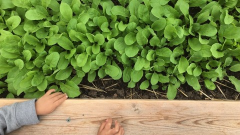 Beginner's Guide to Gardening: Building Raised Beds