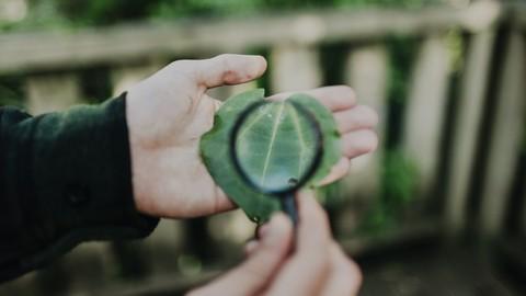 Free Mindfulness Tutorial - Focus Toolkit