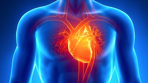 Cardiac Anatomy & Physiology