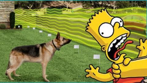 Netcurso-how-to-install-underground-dog-fence-easy-way-master-class
