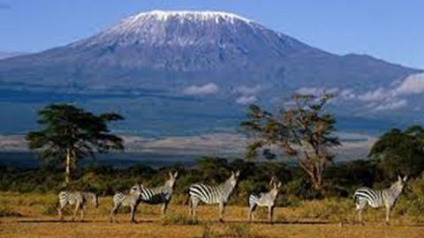 Be Expert in Swahili Language