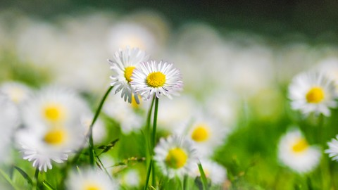 Netcurso-harvesting-self-love-through-ahimsa