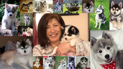 Pomsky Dog Care and Training Course