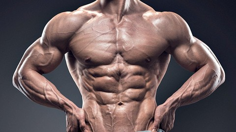 Your Body Building Guide:  Muscle Building For Beginners!