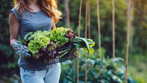 Netcurso-csa-professionals-be-a-successful-veggie-box-member