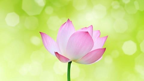 Yogananda Meditation For Deep Daily Practice
