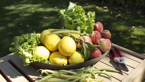 Vegetable Gardening: How to Grow Healthy, Fresh Food at Home