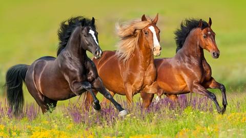 Netcurso-horses-101-colors-breeds-disciplines