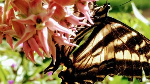 Netcurso-create-a-butterfly-garden