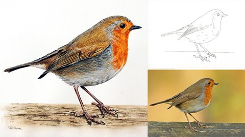 Netcurso-how-to-paint-a-realistic-robin-bird-in-watercolour