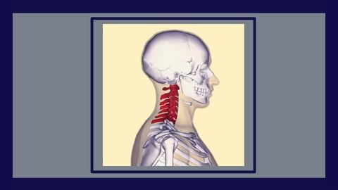 Osteopatía cervical y occipital