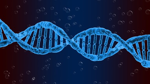 Exploring Genetics & Evolution Through Physical Anthropology
