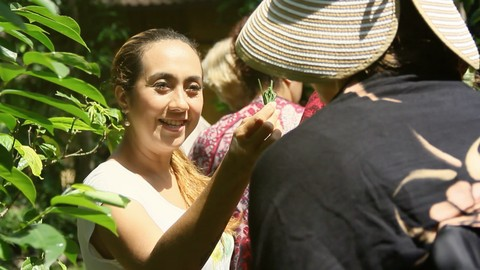Free Herbalism Tutorial - Balinese ancient knowledge about Beauty from Plants and Herb