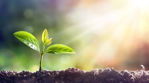 Netcurso-transforming-your-life-using-seed-system