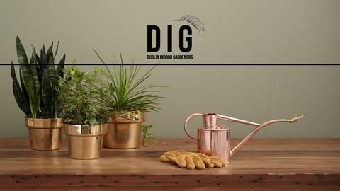 Houseplants 101: A Beginners Guide to Indoor Gardening