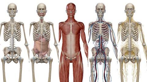 Anatomy, Physiology & Pathology Foundations