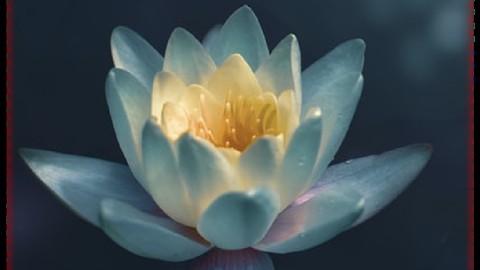 Netcurso-free-meditation-course-with-sankalpa