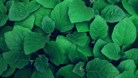 Nitrogen Fixation and Plant Genetics MCQ Practice (Bio Tech)