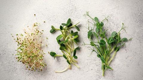Netcurso-health-benefits-of-sprouts-microgreens