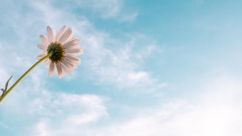 Netcurso-healing-through-grief-loss