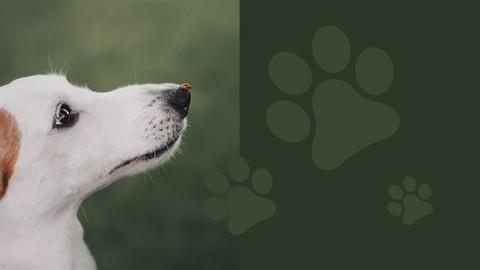 The formation of dog behavior